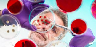 Man looking at petri dishes: academia and pharma